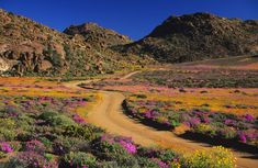 Road through flowers, Geogap Nature Reserve, Namaqualand, Northern Cape Province, South Africa - Lanz von Horsten/Getty Images Best Weekend Getaways, Africa Destinations, Summer Travel, Summer Vacations, Nature Reserve, Africa Travel, Amazing Nature, Where To Go, Cool Places To Visit
