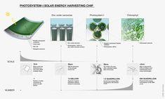 Photosystem I solar harvesting infographic