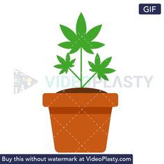 A GIF icon of a pot with a marijuana plant in it