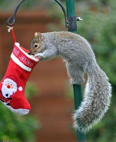 49 Ideas For Baby Animals Adorable Wallpaper Christmas Squirrel, Christmas Animals, Christmas Humor, Merry Christmas, Christmas Stocking, Christmas Morning, Christmas Treats, Animals And Pets, Baby Animals