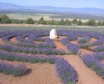 Mt. Shasta Lavender Labyrinth