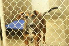 Shepherd mix male less than a year old  Kennel A16 Available NOW**** $51 to adopt  Smaller dog (about to my knees)   Located at Odessa, Texas Animal Control. https://www.facebook.com/speakingupforthosewhocant/photos/pb.248355401855372.-2207520000.1414793474./866746980016208/?type=3&theater