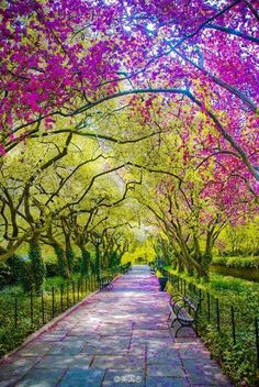 Central Park in the summer