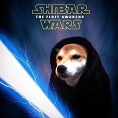 いいね!1,550件、コメント134件 ― kaori kinakoさん(@kinakorin)のInstagramアカウント: 「* いよいよ はじまる 本日 公開 #SHIBARWARS イナズマの覚醒… 早くアキレスよこしなさい… * Special thanks @vo_co * #柴犬#shiba #shibe…」