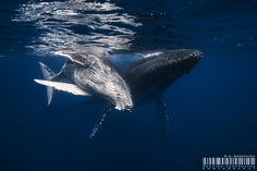 Great day for the Whales by Gaby Barathieu on 500px
