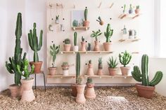 At Trendland we Love Cactus! And when a concept store opens with only cacti we are already fan! Kaktus København is Denmark's first concept store for cacti and succulents. At Kaktus København Indoor Cactus, Indoor Garden, Indoor Plants, Gravel Garden, Garden Oasis, Terrace Garden, Water Garden, Deco Cactus, Cactus Flower