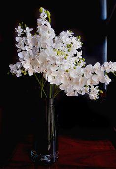 Cream White Baby Phaleanopsis Orchid Flowers
