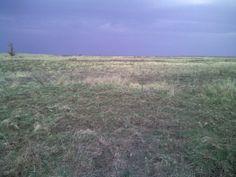 Duck field