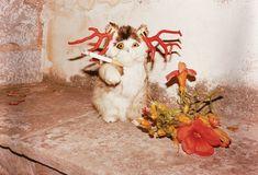 Cat-smoking-Hydra-web-2012. by Jürgen Teller