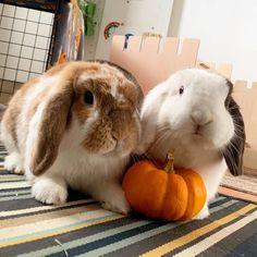 Bunny Rabbit T Shirt Apparel Cute Animal Memes, Cute Animal Pictures, Cute Funny Animals, Super Cute Animals, Cute Little Animals, Cute Baby Bunnies, Bunny Bunny, Cutest Bunny Ever, Pet Vet