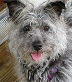 Col. Potter Cairn Rescue Network: Sunday Sweets - Shades of Gray - Broderick