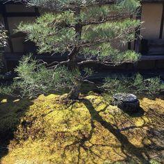 #japan #kyoto  #temple #shrine #zen #daitokuji #daisenin #garden