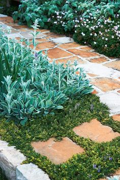 Sydney architect Hugh Burnett shares his top tips for creating a soft, flowing garden with pretty perennials that change with the seasons. Unique Gardens, Beautiful Gardens, Deer Resistant Garden, Container Gardening Vegetables, Succulent Containers, Container Flowers, Container Plants, Vegetable Gardening, Garden Inspiration