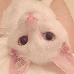 ୨୧⑅* * おはようございます〜🌼 * #みるく#milk#ねこ#猫#しろねこ#白猫#にゃんすたぐらむ#にゃんだふるらいふ#にゃんこ#子猫#こねこ#cat#whitecat#instacat#catstagram#ilovecat#ilovemycat#cute#cutecat#picneko#みんねこ#ピクネコ#ペコねこ部#ねこ部#ダイクロイックアイ#オッドアイ