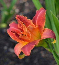 Scarlet Marie  6 13 '12  ffo by Clip Lady, via Flickr