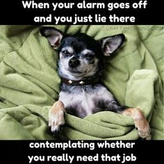 Funny Dog meme - when your alarm goes off and you just lie there contemplating whether you really need that job.
