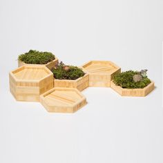 GREEN DESIGN TRENDS - This set of six hexagonal bamboo planter trays are designed to be redesigned. Perfect for stacking, they beautifully display moss, air plants, potpourri or whatever strikes your fancy. The layered bamboo is arranged to highlight the beautiful edges of natural bamboo from every angle. Buy several sets for a unique table center piece | Available on our e-shop in collab w/ fabulous +Modify Furniture #interiordesign #decor #contemporary #sustainable #newtrends…