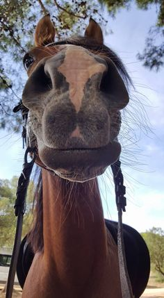 serious horse, jk, love it, adore it, must love animals, must love horses, beautiful horse, photo part two