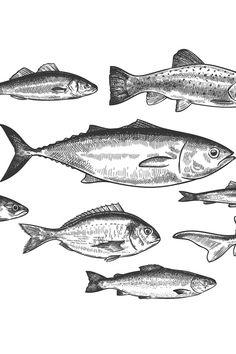 Tattoo Sleeve Themes, Sleeve Tattoos, Shoal Of Fish, Drawn Fish, Marine Ecosystem, Fish Drawings, Logo Background, Scene Creator, Pattern And Decoration