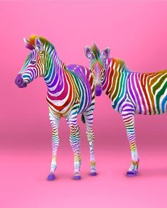 Ramzy Masri is a talented Brooklyn-based graphic designer who uses rainbow colors as a major inspiration for his artwork. Rainbow Zebra, Rainbow Art, Rainbow Colors, Rainbow Rocks, Cute Little Animals, Cute Funny Animals, Foto Poster, Rainbow Aesthetic, Rainbow Wallpaper