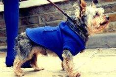 Yorkshire terrier in the Darcy Mini blue duffel