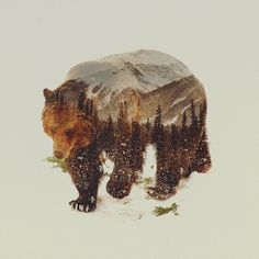 Arctic Grizzly Bear Art Print by Andreas Lie Bär ich Leinwand drucken # von Andreas Lie Canvas Artwork Canvas Artwork, Canvas Prints, Art Prints, Animal Prints, Abstract Canvas, Art D'ours, Illustration Noel, Bear Art, Art Graphique