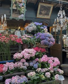 Flowers Nature, My Flower, Beautiful Flowers, City Flowers, Fresh Flowers, Images Esthétiques, No Rain, Flower Aesthetic, Summer Aesthetic