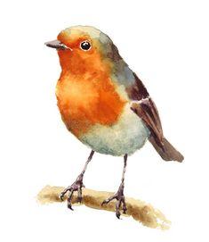 Watercolor Pencil Art, Watercolor Pictures, Watercolor Paintings, Bird Illustration, Watercolor Illustration, Robin Bird Tattoos, Still Life Art, Bird Drawings, Art Plastique