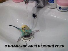 Memes Funny Faces, Funny Video Memes, Cartoon Memes, Stupid Funny Memes, Bird Meme, Hello Memes, Happy Memes, Russian Memes, Fun Live