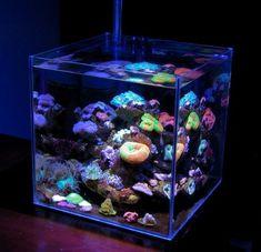 Ecoreef Nano Saltwater Aquarium #aquarium