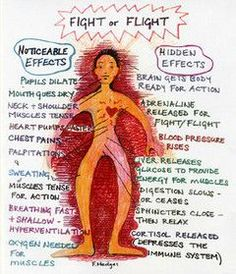 Understanding the fight or flight response & the reality of response on your body. Remember any form of anxiety, stress, triggers or pressure can/will trigger this response.