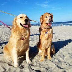 Visting Myrtle Beach with dogs. Photo: K9HarperLee
