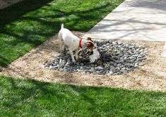 Dogscaping Part 2: Tips for Designing a Beautiful Dog-friendly Garden