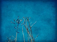 weeds by laikanet Photograpy, Art Cart, Art Painting, Arty, Painting, Art, Blue Color, Color, Color Patterns