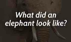 They say an elephant never forgets. Elephants Never Forget, African Elephant, Liking Someone, Beautiful Images, Fun Facts, Cute Animals, Creatures, Sayings, Elegant