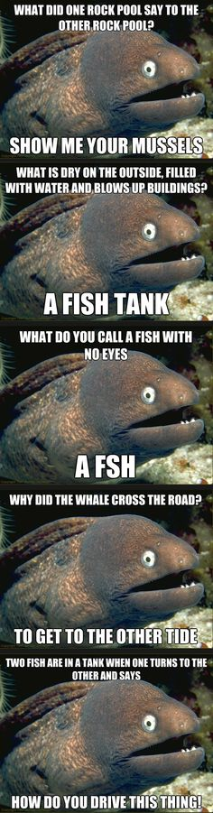 Bad Eel Jokes xD!!    I love bad jokes...but no one else seems to.