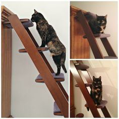 The Cat Ladder: Catification at Its Best