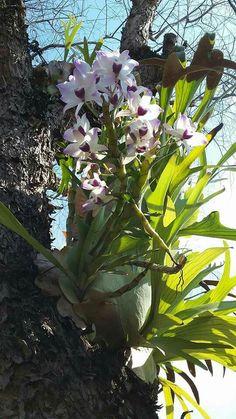 Cactus, Wood Trunk, Dendrobium Orchids, Places, Flowers, Plant, Orchids