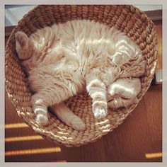 {soft belly in a basket}