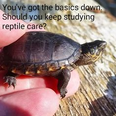 You've got the basics down. Should you keep studying #ReptileCare?