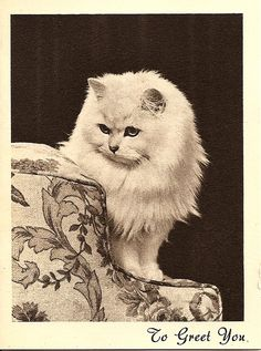 """""""To Greet You"""" pretty vintage cat christmas card"""