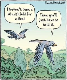 This is how birds think. Nice little pit stop.