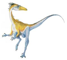 Art illustration - Dinosaurs - Syntarsus: was a genus of theropod dinosaur that lived in the Jurassic Africa, had His neck and long tail is fed on reptiles, small mammals and flying insects. He raced on its hind legs like an ostrich, while chasing prey. He also needed to run to escape the large carnivorous dinosaurs. Crowning his wedge-shaped head, he wore a strange crest.