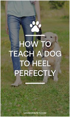 Off Leash Dog Training, Training Your Puppy, Dog Training Tips, Doggies, Pet Dogs, Pets, Emotional Support Dog Training, American Alsatian, Puppies Tips