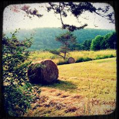 Hay bails in the field above the Red Barn Arts Center in Wellsboro, PA.