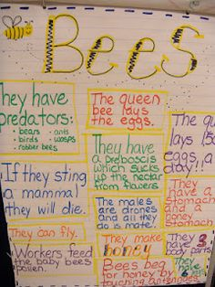 We were busy bees today! We started by reading this book by Melvin Berger. Then we read this WONDERFUL book that I found at Barnes and Nob. Bee Facts For Kids, Bees For Kids, Preschool Classroom, Kindergarten Activities, Classroom Themes, Fall Preschool, Bee Life Cycle, Bee Activities, Bee Theme