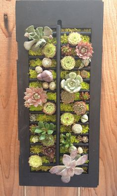 Succulent Vertical Garden in Vintage Window Shutter (SKINNY MINI)
