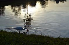 #lago #por-do-sol