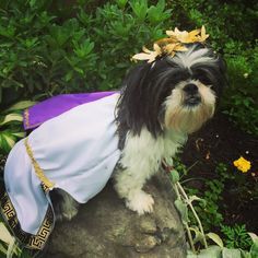 If your powerful pup feels like paying homage to the great gods and goddesses of ancient Greece, this might be the right look. Besides, you already treat her like a goddess anyway.Get the costume here.