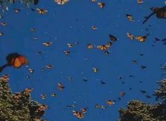 Butterfly migrations - My Gardening Tips 2019 Aesthetic Movies, Film Aesthetic, Aesthetic Images, Aesthetic Videos, Aesthetic Grunge, Aesthetic Vintage, Aesthetic Photo, Aesthetic Pastel, Butterfly Migration